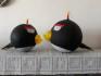 Angry bird-Bomb-1